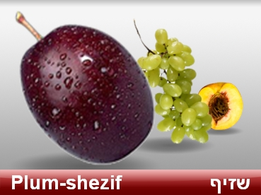 words in Hebrew