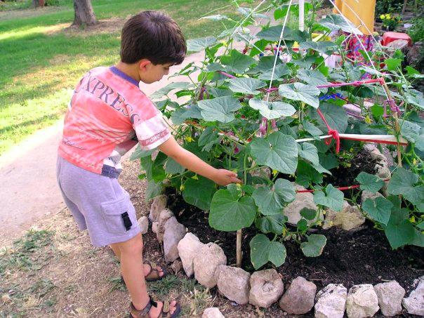a kid in a community garden