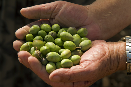 hands holding olives
